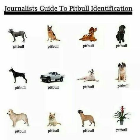 2015-09-09-1441826812-4655468-journalistpitbull-thumb